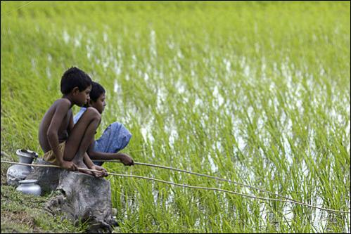 Children fish in a paddy field in Bijoynagar, a village in the Sundarbans, India, Tuesday, Feb. 19, 2008.