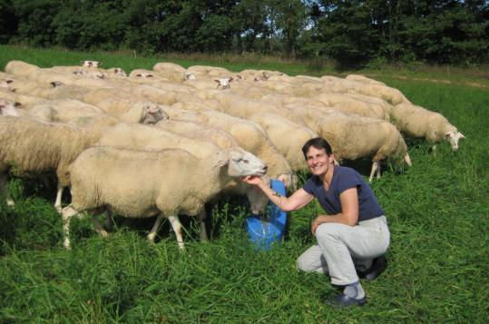 Cheesemaker Karen Weinberg with her East Friesian ewes at her farm in Shushan, N.Y.