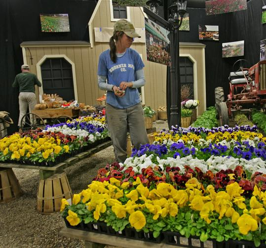 Lindsey Gerlach checked a display of pansies during setup for the 2007 New England Spring Flower Show. The 2009 sho