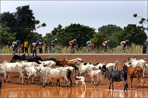 The pack rides past a watering hole during the 6th stage of the 22nd Tour du Faso cycling race between Laye and Ouahigouya, Burkina Faso, Wednesday, Oct. 29, 2008.