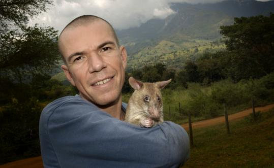 Bart Weetjens in Tanzania with one of his trained rats.