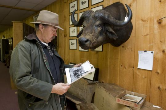 Beneath a mounted head of a Cape buffalo shot by Ted Williams (inset), Nick Peck of Nashua examined a photo.