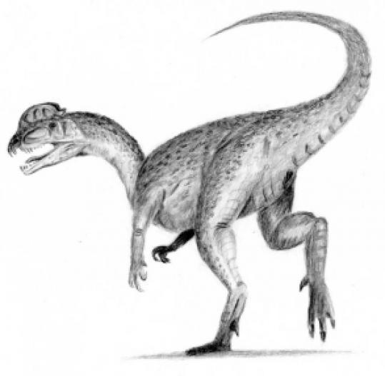 An artist's rendering of a Dilophosaurus, believed to have roamed Pioneer Valley.