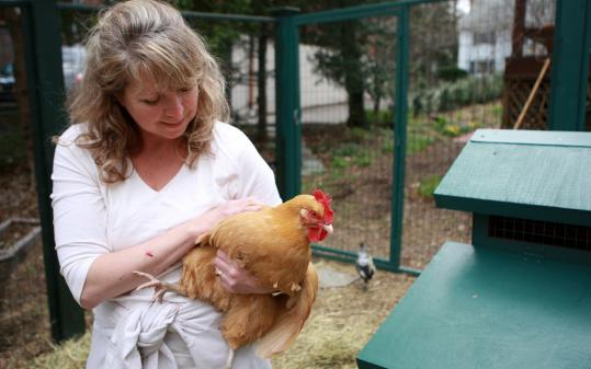PHOTOS BY JONATHAN WIGGS/GLOBE STAFFGale Pryor, who keeps hens at her Belmont home, says she has been inundated with calls from friends in other towns who want to start their own coops.