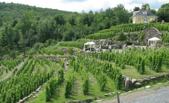 Over 50 years, Czech-born Henrietta Antony turned 450 acres into Chapelle St. Agnes Vineyard.