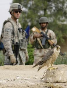 A US and Iraqi soldier took part in a joint operation yesterday in Jalawla, a town in Diyala Province about 70 miles northeast of Baghdad.