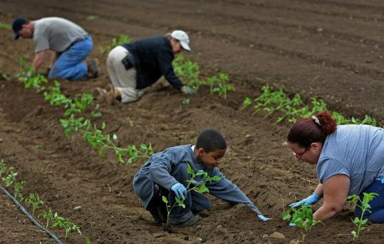 Marisol Velazquez and her son, Anthony, 8, worked on the Brookwood Community Farm in Milton on Saturday.
