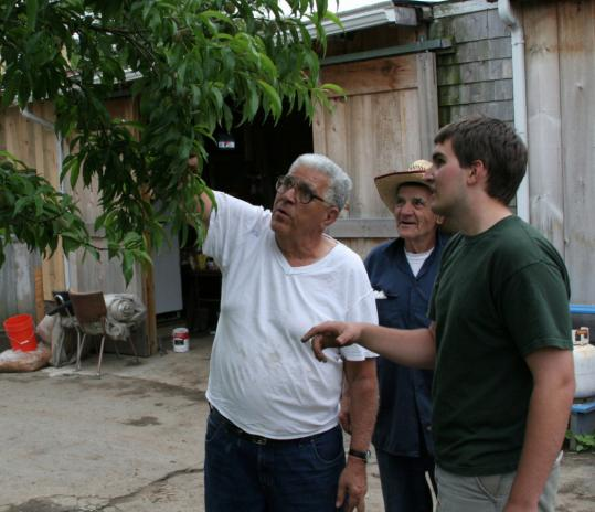 From left: Sal and Peter Sergi, with volunteer Sean Mahoney at Sergi Farms in Belmont.