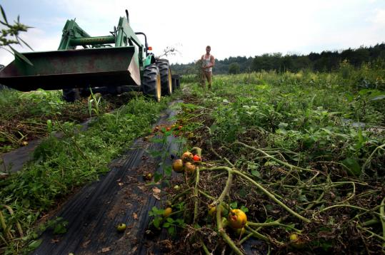 Organic farms, including Lindentree Farm in Lincoln, have been hit especially hard by the outbreak of the contagious fungus.