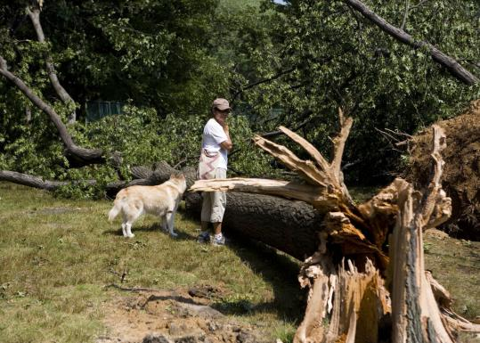 Yadira Malave inspected an uprooted tree in Central Park yesterday. The storm packed wind gusts as high as 80 miles per hour.