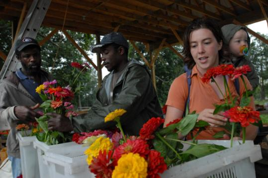 From left, Courtney Maloney, Fitzroy Halstead, and Kate Stillman sorted zinnias before going to the Brookline market.