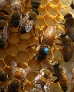 Beekeepers will monitor their hives for peripheral damage as pesticides are applied in Worcester to treat a beetle infestation.