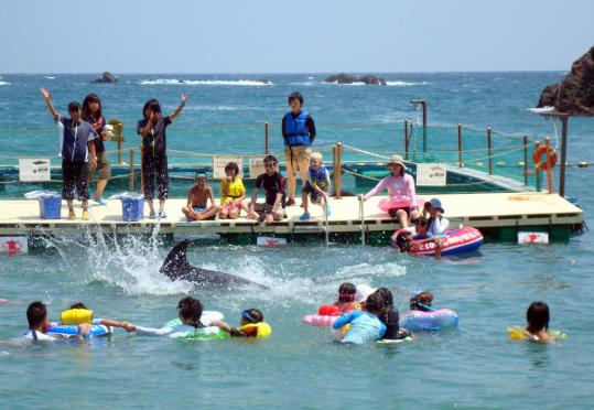 Tourists can swim with dolphins at Whale Beach, a popular attraction in Taiji, Japan. Not many of them know what happens to the animals when the beach closes in the fall.