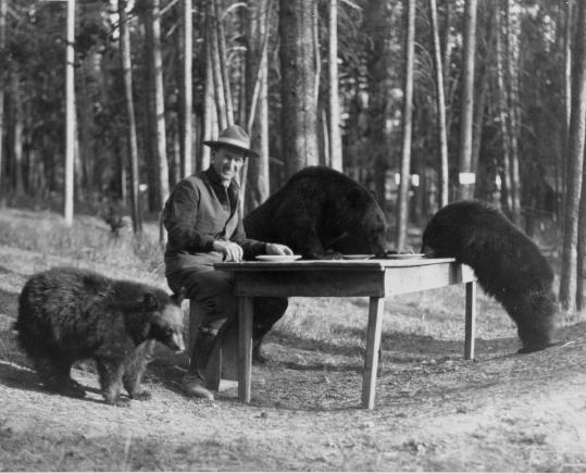 Yellowstone superintendent Horace Albright in 1922. After prodding by biologists, the park's bears were no longer fed handouts.