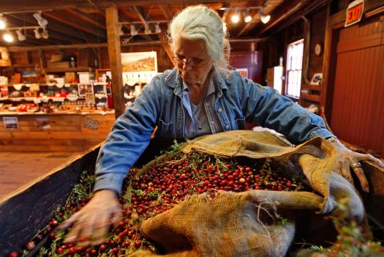 At Flax Pond Cranberry Co., in Carver, Dot Angley empties a bag of dry-harvested berries into a sorter that separates the chaff from the fruit.