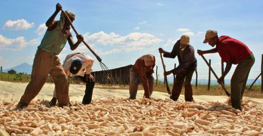 Two managers (second from left, center) with Karuturi, an Indian company with commercial farms in Ethiopia, checked=