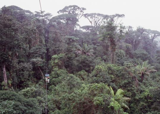 A gondola traverses the 1 1/2-mile rain forest route along a cable suspended between a dozen steel towers. Guides lead nature walks among the 1.5 million species in the Neotropical setting.