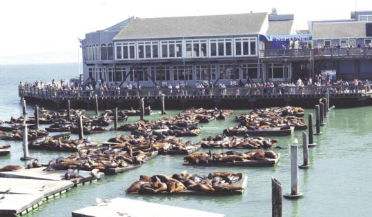 Most of the more than 1,500 sea lions that crowded a San Francisco pier last month has departed, perhaps to hunt food.