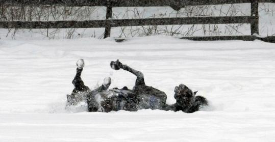 Snow Subfreezing Temperatures Take Toll In South Eastern