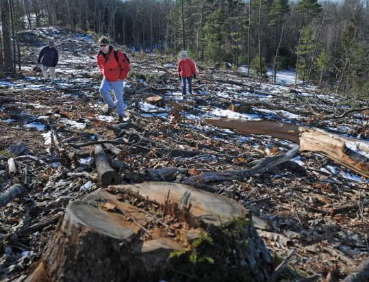 The Quabbin clear-cut, said Chris Matera (foreground), harms the forest ecosystem and threatens the reservoir.