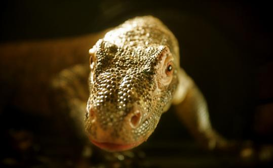 "A Komodo dragon is part of the Virginia Aquarium & Marine Science Center's ""Restless Planet'' exhibit."