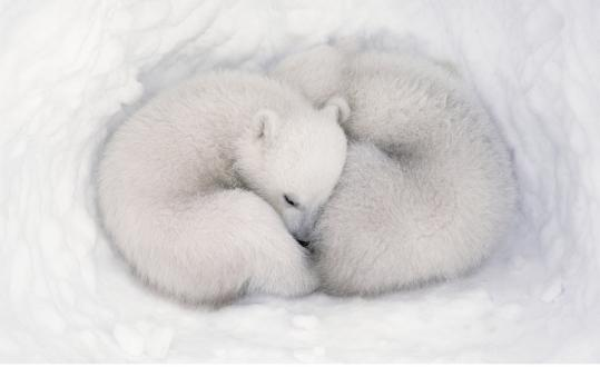 "Polar bear cubs curl up together, and an African elephant and her calf roam Botswana in Disneynature's first nature documentary, ""Earth,'' which was released last year on Earth Day. Its second film, ""Oceans,'' opens April 22."