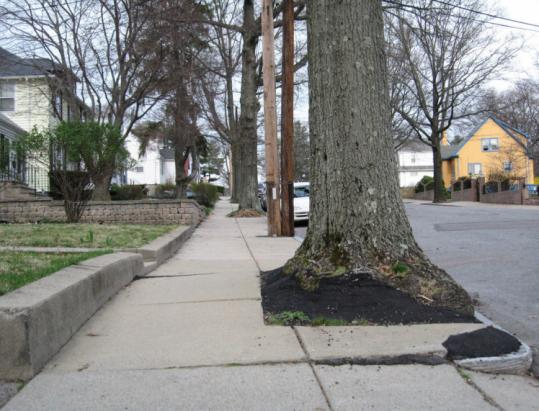 A reader in Hyde Park said city workers applied tar at the base of the tree in front of his house, but it remains a safety hazard.