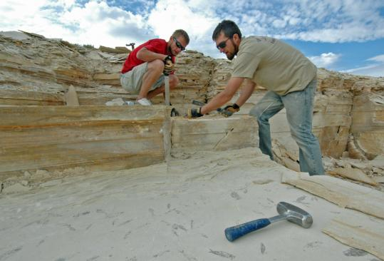 Brothers Casey (left) and Courtney Bluemel, guides at Ulrich&#8217;s Fossil Gallery, pry into layers of limestone. The tiny Diplomystus (below) is a distant ancestor of the herring.
