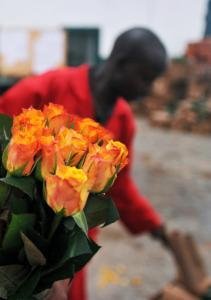 A flower farm worker in Kenya prepares to throw out roses that that can't be shipped to Europe because of the lingering ash cloud from Iceland's volcano.