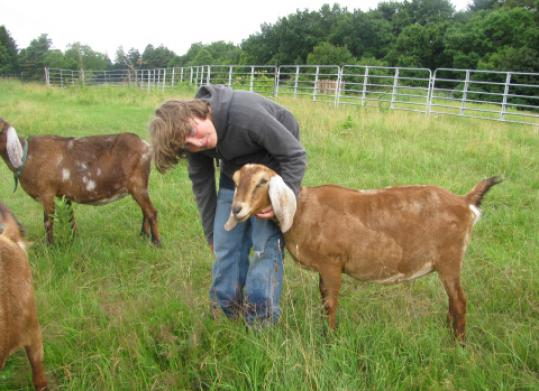 A Critters' Trek will be held Saturday at Cuvilly Arts & Earth Center in Ipswich, to support its barnyard animals.