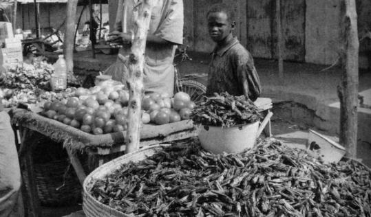 Hugh Raffles explores the paradoxical role of grasshoppers and locusts in Africa. Here they are being sold as delicacies to shoppers. But the insects also periodically swarm, causing famine.