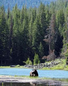 Wyoming is seeking royalties from land now used for grazing in Grand Teton National Park.