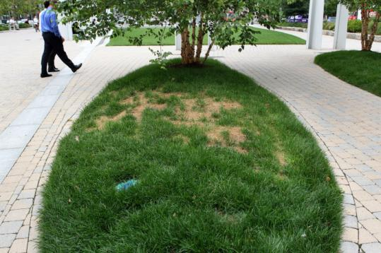 Yellowing grass on a section of the Rose Fitzgerald Kennedy Greenway. The state blames funding cuts on ailing finances.