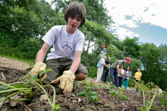 Lexington Boy Scout Tim Schoch, 13, who has earned a merit badge marking the group's centennial, plants vegetables for a community service project.