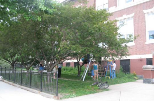 EarthWorks leads a group of volunteers and neighborhood residents in harvesting sour cherries at William E. Russell School in Dorchester.