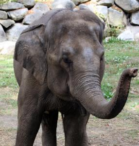 Dondi the elephant died Wednesday at Southwick's Zoo. There were no indicators of disease aside from a tooth infection.