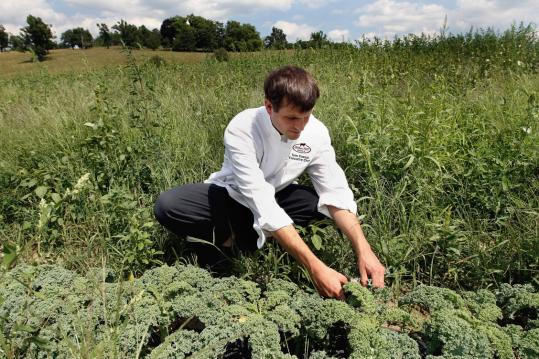 Chef Tom Fosnot picks kale at Gibbet Hill Farm in Groton, yards from the restaurant's kitchen door.