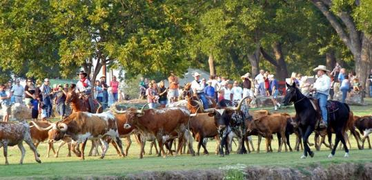 Everyone but the cows is in period costume for the Up the Chisholm Trail Cattle Drive & Chuckwagon Cook-off in Georgetown, Texas. Cowboys drive Texas longhorn cattle along the San Gabriel River and cooks compete at chuckwagons, all of them using the same basic foods.