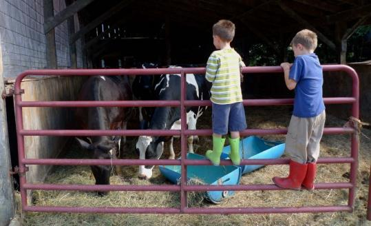 Johnny, left, and Henry Ferrelli, of Tampa, Fla., at Liberty Hill Farm's cow barn.