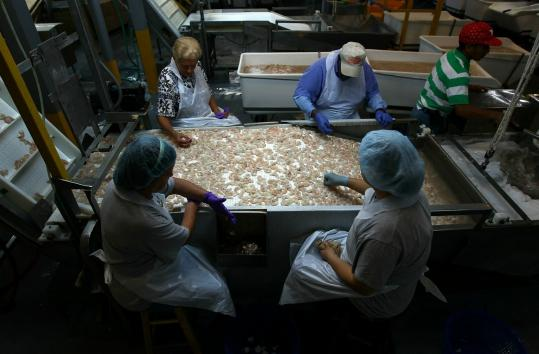 Workers sorted shrimp at the frozen seafood plant in Lafitte, La., yesterday. US officials say Gulf Coast shrimp is safe to eat.