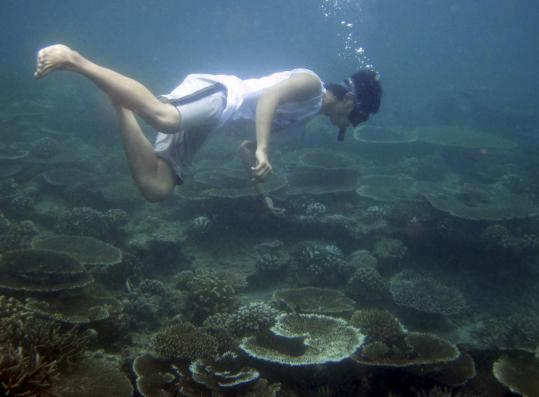 Teams of marine biologists dispatched in May to Aceh Province, on the tip of Sumatra island, discovered massive bleaching of the coral reefs, which were recovering from the 2004 tsunami.