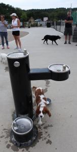 Dudley, a thirsty King Charles spaniel, at the $200,000 Pilgrim Bark Park, which has memorials to the Mayflower's two dogs.