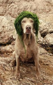''William Wegman: Inside | Outside'' collects playful images of Weimaraners.