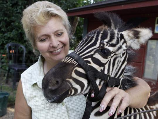 "Cindy Huntsman, with a baby zebra at her Stump Hill Farm near Massillon, Ohio, says incidents of attacks by exotic animals kept as pets ""are a very small percentage.''"