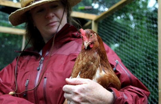 Carolyn Plourde of Lexington says her chickens' free-range lifestyle means better eggs.