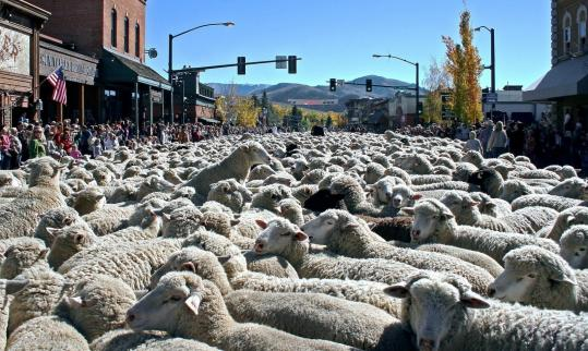 Sheep in Idaho once led their human tenders in population and are the fuzzy focus of an annual festival of all things sheepish in Ketchum.