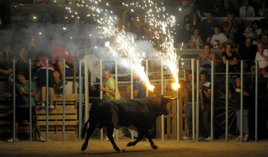 A bull with flaming horns ran at an event last month in Catalonia, Spain. Animal-rights activists say such traditions are cruel.