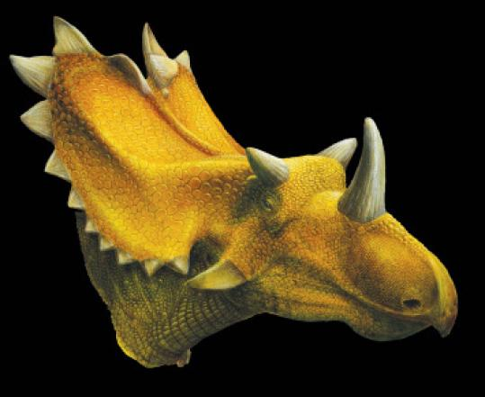Artist's reconstruction of the Utahceratops.