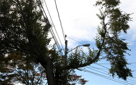 On Milton's Beacon Street, a tree was pruned back from wires and a street lamp.