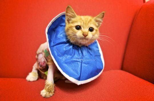Peaches was on the mend after crawling into a car engine.
